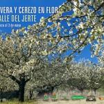 cartel-oficial-primavera-y-cerezo-en-flor-2015-150x150